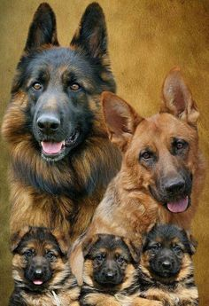 German Shepherd Family.... Relax with this nature photo. #Relax more with this #free #music with #BinauralBeats that can #heal you. #landscaping #LandscapingIdeas #landscapeDesign