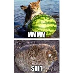 LOLcats is the best place to find and submit funny cat memes and other silly cat materials to share with the world. We find the funny cats that make you LOL so that you don't have to. Stupid Funny Memes, Funny Animal Memes, Funny Relatable Memes, Funny Cats, Funny Animals, Cute Animals, Hilarious, Fat Funny, Funny Pictures With Captions