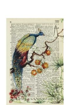 Jean Cody. Vintage Book Page-Art. This page is over 75 years old and salvaged from a tattered 30's dictionary. She printed this delightful image of a peacock (reproduced from an ancient painting) onto the lovely yellowed page.