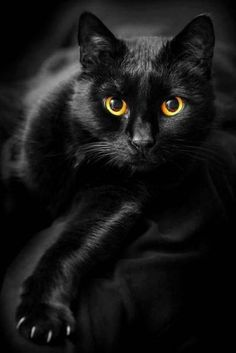 Black cat with black and yellow eyes awesome! http://ift.tt/1Vw1ikB