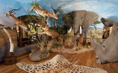 Trophy Rooms, Taxidermy, Game Room, Hunting, Elephant, Africa, Gallery, Animals, Design