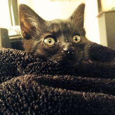This is my kitten aboo she is a good loving kitten