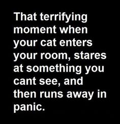 Do you ever wonder what the cat saw?  #cats #humor