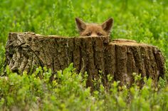 These 22 Photos Will Make You Fall In Love With Foxes | Bored Panda