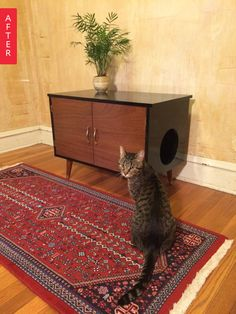 Make this for the cat lover in your life! Before & After: Craigslist Cabinet Turned Cat Box