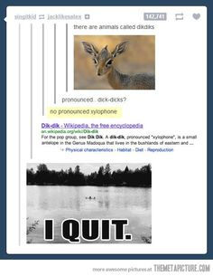 Omg that's hilarious.....but seriously wats up with xylophone of all things!