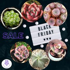 Black Friday Sale For Succulents Houseplants. Get your rare succulent houseplants online. Worldwide Shipping. Use Discount code: E10PER We bring joy to your home gardening experience. Buy Succulents Online, Succulents For Sale, Rare Succulents, Planting Succulents, Planting Flowers, Best Indoor Plants, Outdoor Plants, Outdoor Gardens, Outdoor Decor