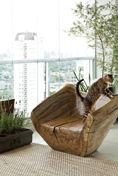 My new chair in Sao Paulo - go ahead kitty kitty kitty, you can scratch but you can't damage!!!!
