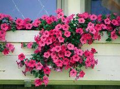 Resultado de imagem para plantas resistentes a sol e chuva
