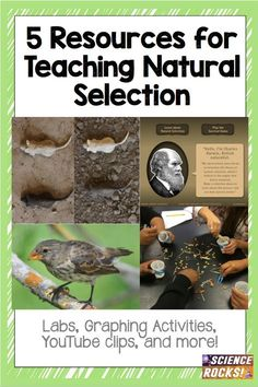 5 must-use labs and activities for teaching natural selection and evolution!