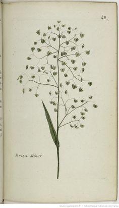 Danielle Miller  Trend 2: small delicate florals   BRIZA - Briza minor. L'amourette tremblante