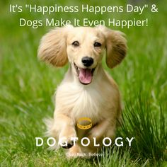 """It's """"Happiness Happens Day"""" & Dogs Make It Even Happier!"""