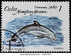 Google Image Result for http://image.shutterstock.com/display_pic_with_logo/459844/459844,1274048502,2/stock-photo-cuba-circa-a-post-stamp-printed-in-cuba-shows-sea-mammal-dolphin-series-circa-53217412.jpg