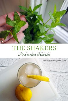 History of the Shakers, some of the first herbalists
