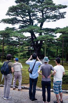Fotografía de unos turistas admirando un árbol en Kanazawa, Japón, cuándo encuadrar en vertical.