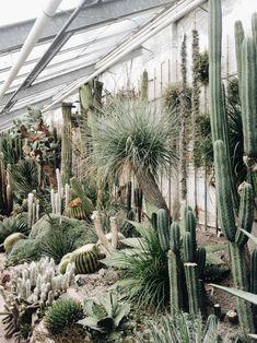 inside #banditplants