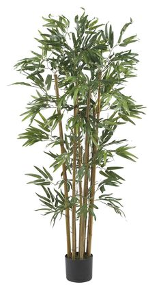 Features:  -Perfect for any room or office decor.  Product Type: -Tree.  Plant Type: -Bamboo.  Orientation: -Floor.  Plant Material: -Other/Silk.  Base Included: -Yes.  Plant Color: -Green.  Base Colo