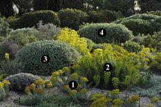 1 : Euphorbia rigida  2 : Euphorbia characias subsp. wulfenii  3 : Ballota acetabulosa  4 : Phlomis purpurea