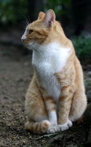 Preview wallpaper cat, walk, sit, spotted 800x1280