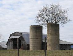 tree in a silo