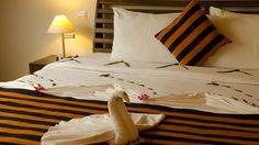 Suites :: The Paradise Resort & Spa