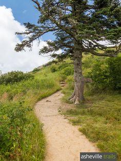 Hike the Art Loeb Trail near the Blue Ridge Parkway to stunning views on Black Balsam Knob south of Asheville, NC
