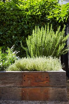 Rosemary and thyme thrive in their raised planter. Photography: Natalie Hunfalvey