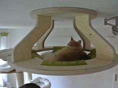 Gold Paw - Designer Natural cat trees and cat room