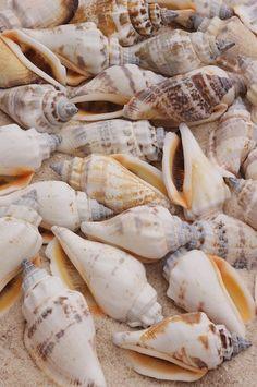 shells by Byron Jorjorian