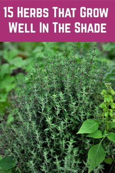 Grow one of these beautiful, fragrant and delicious herbs even in the shadiest of spots. Garden Yard Ideas, Veg Garden, Easy Garden, Garden Shrubs, Vegetable Gardening, Raised Herb Garden, Herb Garden Pallet, Herb Farm, Raised Planter