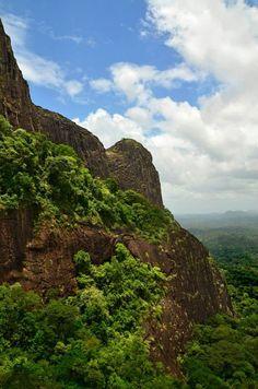 Rainforest in southeastern Suriname