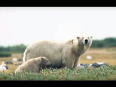 Nanuk Polar Bear Lodge | Churchill Wild Polar Bear Tours