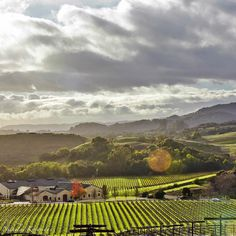 Legacies from all over the world come to California Wine Country. Here looking down on Kieu Hoang Winery in Carneros stories of survival & entrepreneurialism thrive with this American success story. In my mind that's a classic American story of which Legacy is defined. Good night from Wine Country. @kieuhoangwinery #all_my_own #AGameofTones #artofvisuals #awesomeearth #abc7eyewitness #birdseyeview #bestplacestogo #carneros #caliexplored #collection_sky #clouds_of_our_world #destinationearth…