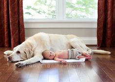 A dog and his baby