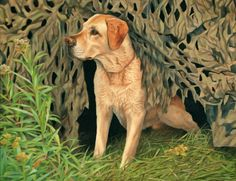 """""""Yaba"""" A commissioned oil - quite large - of Yaba in a duck blind."""