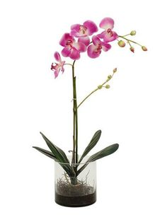 Purple Phalenopsis Orchid (Silk) Gift Delivery, Best Gifts, Orchids, Glass Vase