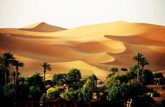 oase sahara - Google zoeken