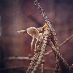 #mushrooms #fungus #forest #fungi #Mycenagalopus #milkingbonnet Fungi, Adventure Travel, Stuffed Mushrooms, Instagram Posts, Mushrooms, Stuff Mushrooms