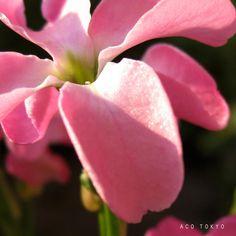 愛のチカラは、無限だ。愛の為に闘ってきた私の過去。闘う事をやめたけど、愛する事が、わからずにいた。今は、判る。気が付かせてくれた方に大感謝なのです。#写真 #photo #花 #flower #ピンク #pink