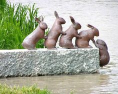 Cute rabbit statues for the garden Dream Garden, Garden Art, Garden Pond, Rabbit Garden, Rabbit Art, Garden Water, My Secret Garden, Garden Statues, Garden Figurines