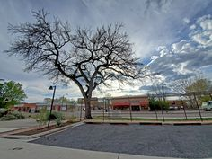 This tree and vine trellis anchor the south parking lot at Castaneda Hotel