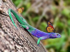 Lovely lizard and monarch butterfly