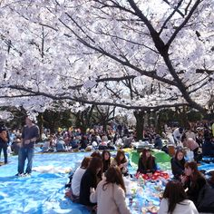 Yoyogi Park-