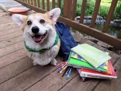 Going Back To School, Dog Photos, Cat Memes, Believe In You, Cats, Happy, Animals, Corgis, Gatos