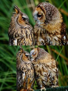 Another Matter Entirely : Good morning. Have some owl kisses.