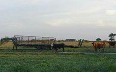 Rio Hondo, Texas ranch land