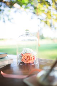 Pretty peach rose under a cloche. Photography by bubblerock.co.nz  Read more - http://www.stylemepretty.com/2013/08/26/french-chateau-wedding-inspiration-from-bubblerock/