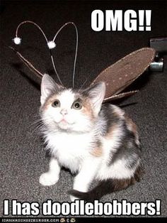 Funny Cat Pictures With Captions | can has cheeseburger website funny cat pics…