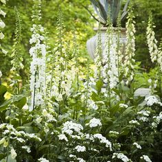 White Garden...Dephinium, Dianthus, Floxglove and more...#spring#garden