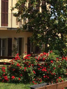 Fioritura Rose Sevillane